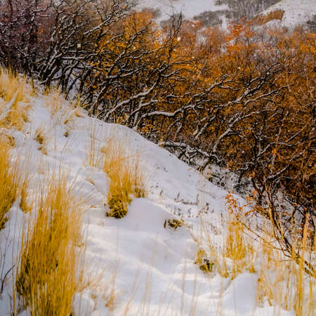 Close up of a slope covered with powdery white snow during winter season