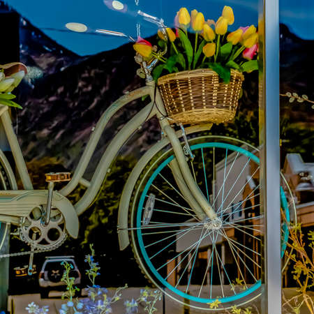 Square frame Flowering plants and hanging bicyle with baskets of tulips behind a glass wall
