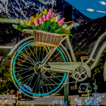 Square Flowering plants and hanging bicyle with baskets of tulips behind a glass wall