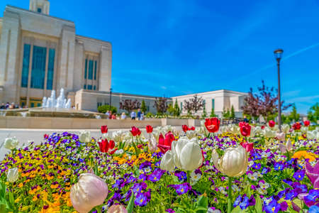 Radiant array of flowers with view of a building and fountain against blue sky