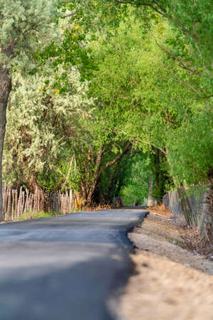 Thick green foliage of lush trees forming a canopy over a sunlit country road. The road is lined with a chain link and barbed wire fence supported by wood posts. Stock Photo