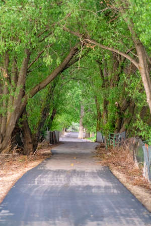 Prolific leaves of tall trees shading a narrow road from bright sunlight. The road is lined with a chain link fence supported by wood posts.