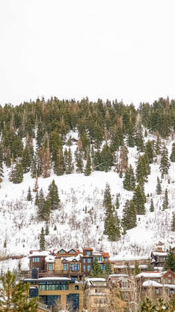 Vertical Homes on a mountain with lush coniferous trees growing on the snow covered slope Stock fotó