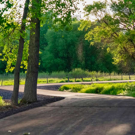 Square Scenic nature view with a road winding through abundant trees on a sunny day