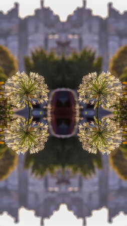Vertical Double reflected view of beautiful white flowers in a dome shape in San Francisco California