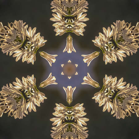 Square square, square, Abstract angular star shape like a snowflake made from photo of white flowers in California
