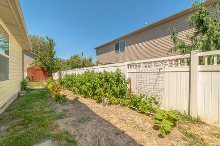 Sunny day view of a backyard with vegetables growing against the white fence