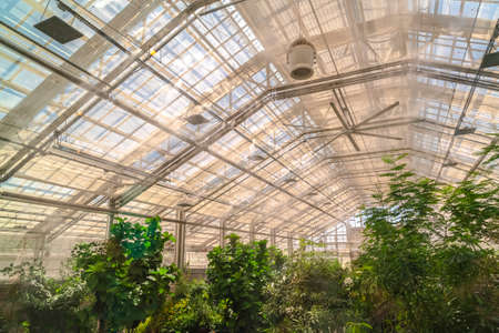 Interior of a greenhouse with lush green plants under the roof with glass panels