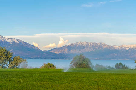 Green grass irrigated by sprinklers with lake and snowy mountain in background. Focus on the field with sprayers automatically watering the grasses.