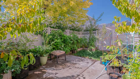 Panorama frame Small private back garden with potted plants and shady leafy green trees surrounded by walls