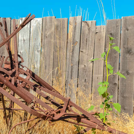 Square Old vintage farming tractor against grasses and wooden fence on a sunny day. Close up of an abandoned farming equipment with rusty metal frames.