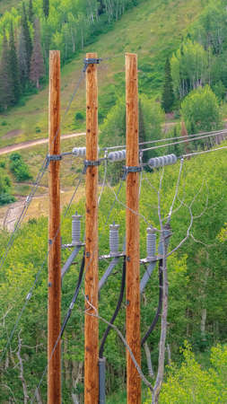 Vertical frame Cable wires of chairlifts in Park City resort against lush green trees in summer