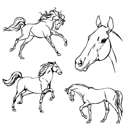 trotting: Horse Illustration