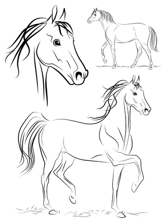 wild horses: Horse. Vector drawing. Illustration