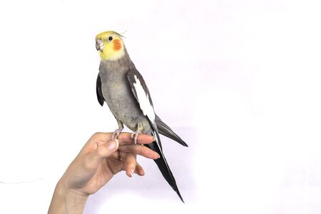Funny parrot trained