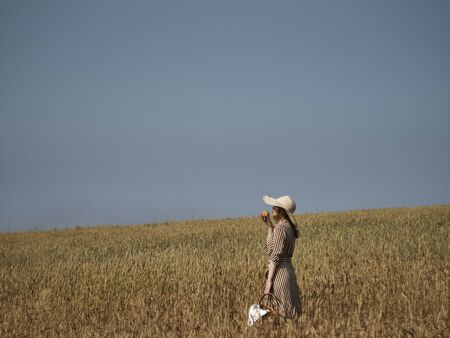 A blonde in a wheat field walks with a wicker basket of apples in a lime hat and a vertical striped dress. Stock Photo