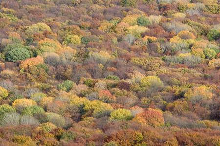 Autumn forest trees texture. Nature background. Crimea, Ukraine