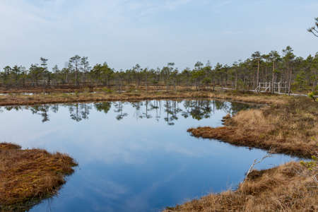 Lake and sky reflection in Kemeri swamps National park Stock Photo