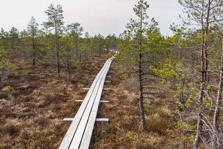 Walking trail in swamps of Kemeri National park.  Jurmala, Latvia