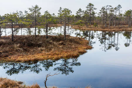 Lake and small islands in Kemeri swamps National park