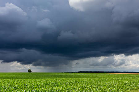 Dramatic stormy and rainy sky above lush rural corn field
