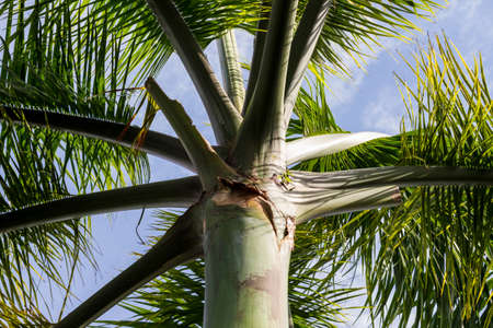View of a palm tree from below against a blue sky. Upward view