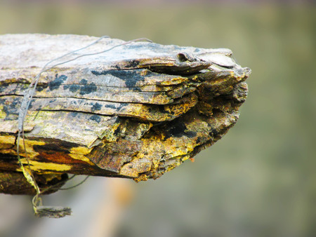 atrophy: Rusty wood decaying with the help of fungus,environment...signs of death visible