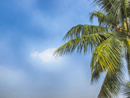 skyscape: Skyscape hdr on an Autumn Noon with a coconut tree. Stock Photo