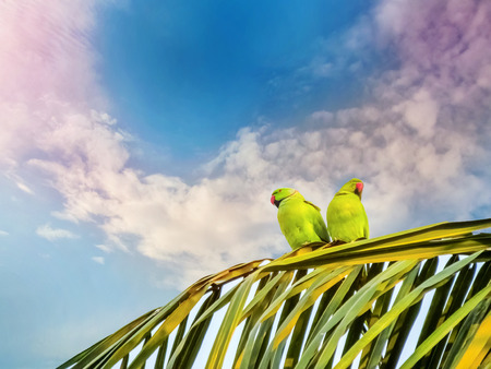 white necked: Mood or emotion of the Parrots not to love in the blue sky background Stock Photo