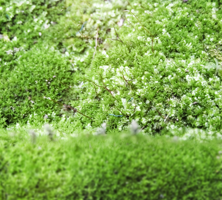 damp: Moss background on the damp ground Stock Photo