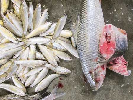cut and blood: Fish displayed for sell in the market place.
