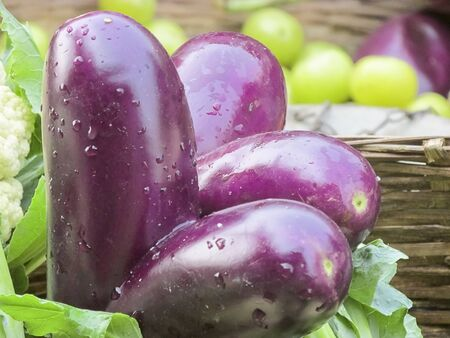 developmental: Attatched forever. Two Brinjals due to developmental error attatched together forever are kept in the selling busket.In India these type of fruits or vegetable are not bought by customers due to some false believes -unlucky etc. Stock Photo