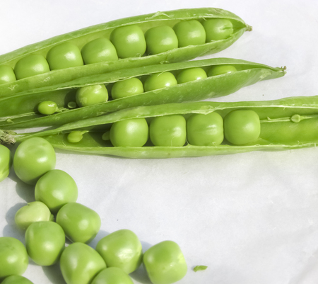 legume: Green Peas fruit the legume ( a winter food edible raw which is rich in vitamins good for health of eye and teeth) on white background.