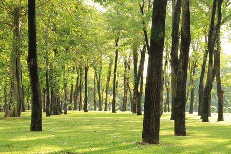 foresta: Alberi e l'erba verde nel parco