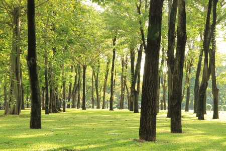 scenic: Trees and green grass in the park