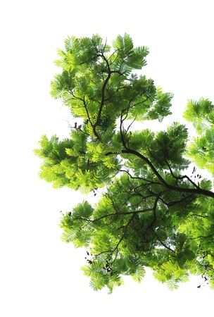 Green leaves with branches isolated on white