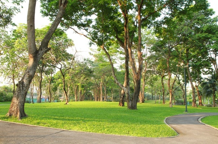 Trees and green grass field in the park photo