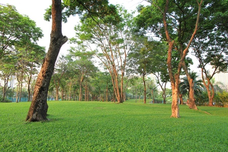Trees and green grass field in the park Stock Photo - 12390683
