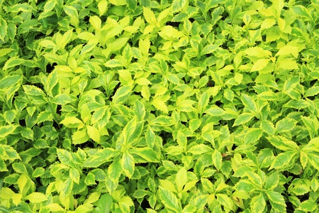 Green leaves background Stock Photo - 12390712