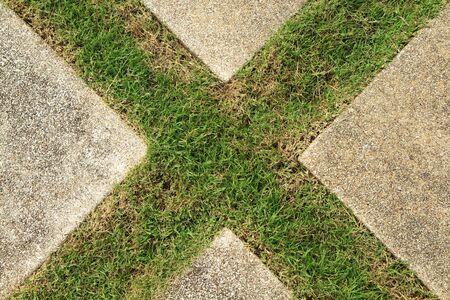 Piso de concreto con la hierba verde en forma de cruz Foto de archivo - 13282503