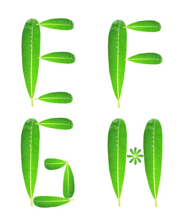 Alphabet letters made from plumeria leaves  photo