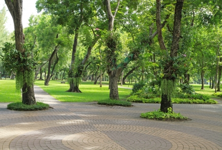 Tree trunks and walkway in the park