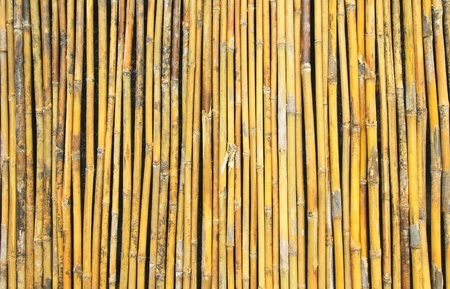Bamboo wall background  Stock Photo - 15943934