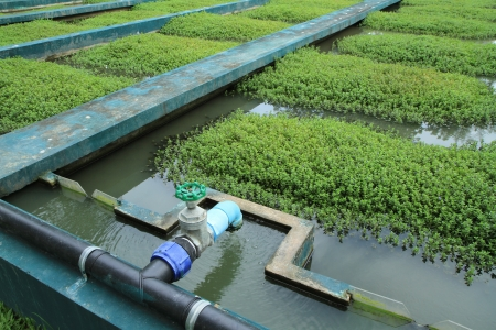 clarifier:  Waste Water Treatment Plant  Stock Photo
