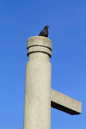 cement pole: Black pigeon on cement pole against blue sky