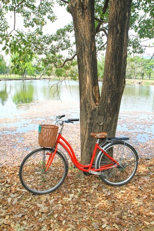 spoked: Red bicycle leaned on a tree on the ground covered with dried leaves