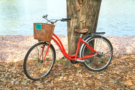 Red bicycle leaned on a tree on the ground covered with dried leaves photo