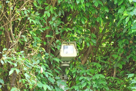 Surveillance camera hided on green tree photo