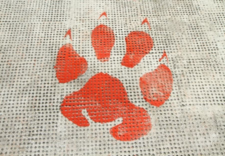 Red animal footprints on rough cement floor background  photo