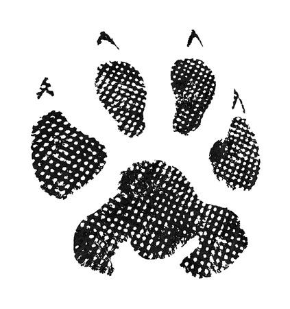 Animal footprint isolated on white background